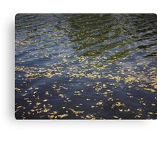 Spring river with catkins Canvas Print