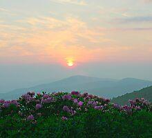 Summer Sunrise by Annlynn Ward