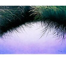"""Nature's Eyelashes"" Photographic Print"