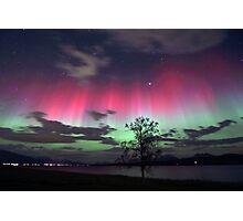 Red Auroras & the tree Photographic Print