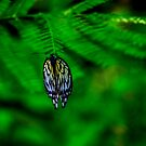 Butterfly by Andre Faubert