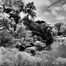 Mallard Lake, Golden Gate Park, San Francisco by Rodney Johnson