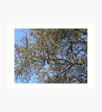 """IL BIANCOSPINO ...un'albero secolare! Italy .................per anna """"anaisanais"""" come rappresentante di tutte le madri che hanno perso un figlio ! Art Print"""