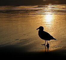 Gull At Sunset by Debbie Stika