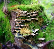 Growth of fungus by shelleybabe2