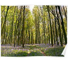 Through the Blue-bells and Beech Woods Poster