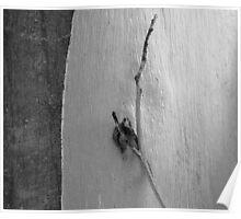 Eucalyptus Trunk, Redwood Regional Park, California Poster