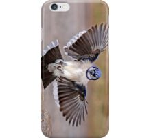 iPhone Case - Blue Jay iPhone Case/Skin