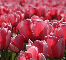 Springtime Tulips by Debbie Stika