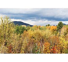Autumn Gold Rush Photographic Print