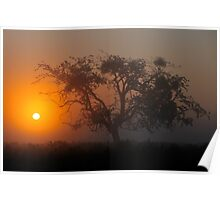 Bushy Park Sunrise Poster