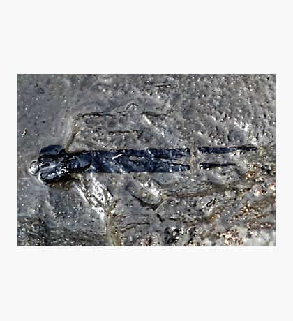 Part of  a  Ichthyosaur Jaw Photographic Print