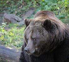 Fred the Bear - Doesn't Dare ... by karina5