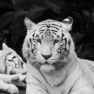 The White Prince Of Tigers by Leanne Allen