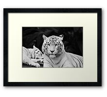 The White Prince Of Tigers Framed Print