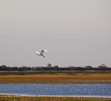 Freedom to Fly by AnnieSnel