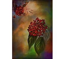 Autumn flavors -Rowanberry Photographic Print