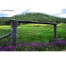Purple Haze to Wollombi, HUNTER VALLEY Photographic Print