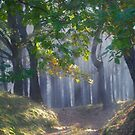 601. ##### MIRACLE FOREST LANDSCAPE . by Brown Sugar . Favorites: 9 Views: 601.  thank you ! by © Andrzej Goszcz,M.D. Ph.D