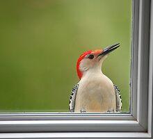 CW a/k/a Crazy Woodpecker by Karol Livote