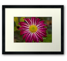Purple Aster Flower Power Framed Print