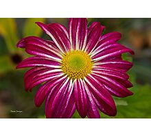 Purple Aster Flower Power Photographic Print