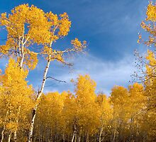 Evening in Aspens by Forrest  Ray