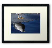 A Gull Reflects Framed Print