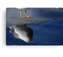 A Gull Reflects Canvas Print