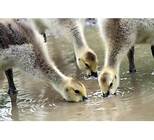 Siblings Having a Drink Photographic Print