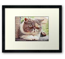 Exotic Shorthair - Persian Cat - Fractalius Framed Print