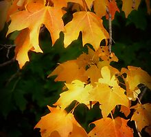 Autumn Splendor by Lucinda Walter