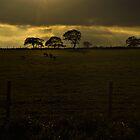 Nidderdale Eve by sammythor