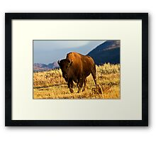 Defender Of The Plains Framed Print