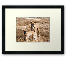 Beautiful Boxers Framed Print