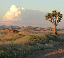 Namib Desert Aloe Tree - Namibia by Austin Stevens
