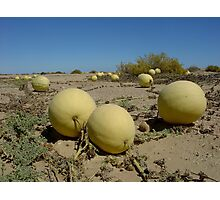 Tsama Melons in the Namib Desert - Namibia Photographic Print