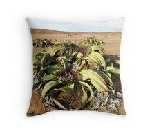Welwitschia Plant - Namib Desert Throw Pillow