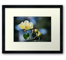 Belle Rose Framed Print