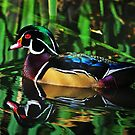 Wood Duck by Rich Summers