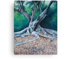 Morton Bay Fig Canvas Print