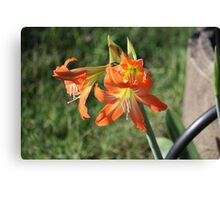 Cluster of Lillies Canvas Print