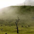 Early Morning Gumeracha, Adelaide Hills by Gerijuliaj