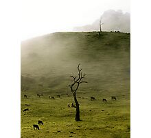 Early Morning Gumeracha, Adelaide Hills Photographic Print
