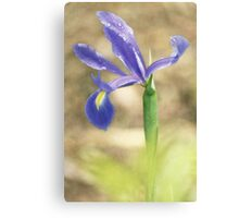 Iris Raindrops Canvas Print