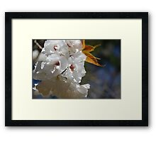 Beautiful blossom Framed Print