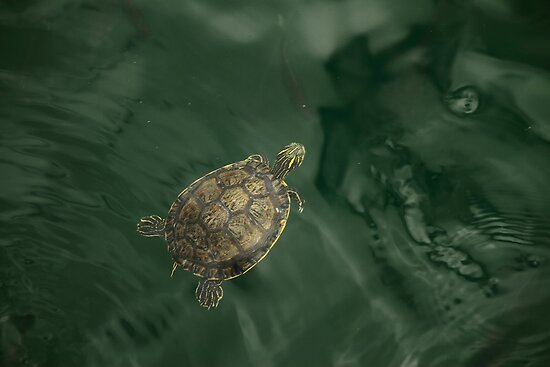 Little Turtle by RoomWithAMoose