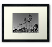 #935 Framed Print