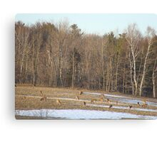 Field Of Deer Canvas Print