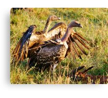 Ruppell's Vultures Canvas Print